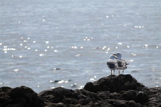 seagull-927196_960_720